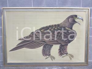 1970 CINA VINTAGE Aquila reale bruna - quadro 178,5 x 120,5 cm