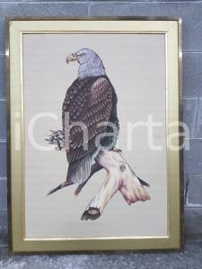 1970 VINTAGE Aquila di mare testa bianca - quadro 92 x 122 cm