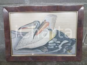 1970 VINTAGE Coppia di pellicani piumaggio bianco e grigio  - Quadro 43,7 x 59 cm
