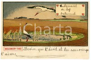 1900 ca Ducks in a pond - MESSMERS THEE *Advertising illustrated postcard