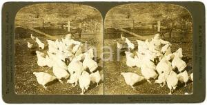 1904 USA CHILDREN The young farmer and his prize stock - Stereoview WHITE