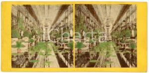 1900 ca s.l. Botanical Gardens - Water lilies - Hand Coloured Antique Stereoview