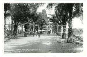 1918 BURUNDI - USUMBURA - Une allée *Photo REPRINT 1950 ANIMEE