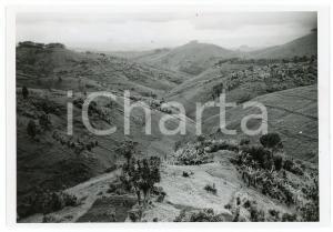1946 RUANDA - RUHENGERI - Bananeraies sur les collines - Photo LEBIED 18x12 cm