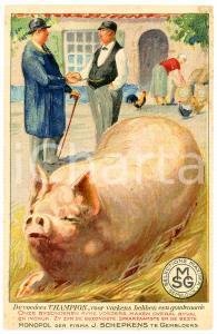 1910 ca. ZWAVELZUUR AMMONIAK (MSG) - Gentlemen and pig *Postcard