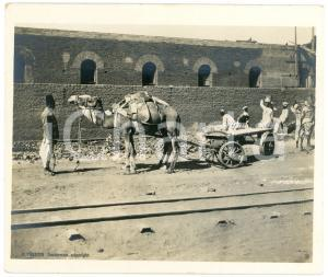 1910 ca Anglo-Egyptian SUDAN - Street scene - Photo R. TÜRSTIG 10x12 cm