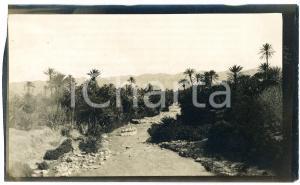 1920 ca ALGERIA - Palmeto presso un'oasi - Foto VINTAGE 14x9 cm