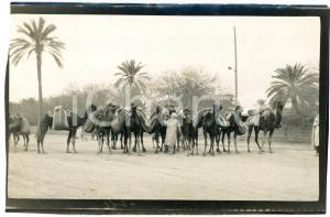 1920 ca ALGERIA - Carovana di cammelli  - Foto VINTAGE 14x9 cm (3)