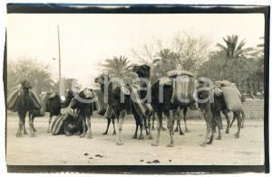 1920 ca ALGERIA - Carovana di cammelli  - Foto VINTAGE 14x9 cm (2)