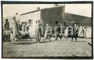 1920 ca ALGERIA - Uomini in un villaggio con il bestiame - Foto VINTAGE 14x9