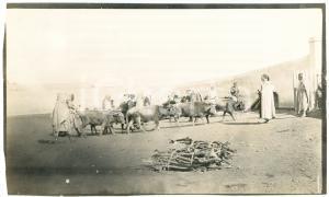 1920 ca ALGERIA - Mercato di bestiame  - Foto VINTAGE 14x9 cm (1)