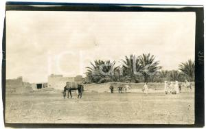 1920 ca ALGERIA - Veduta di un'oasi - Foto ANIMATA 14x9 cm (1)