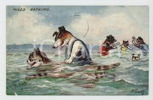1910 ANIMALS Mixed bathing - Dogs and cats at the sea ANTHROPOMORPHIC Postcard