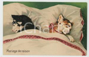 1910 ca ANIMAUX Chats - Mariage de raison - Embossed Postcard FP NV