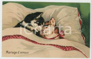 1910 ca ANIMAUX Chats - Mariage d'amour - Embossed Postcard FP NV