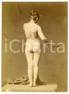 1900 ca VINTAGE EROTIC Nude woman from behind - Studio - DAMAGED Photo 10x14 cm