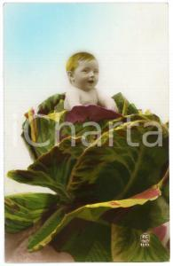 1925 FRANCE - Child out of a cabbage  - Vintage old postcard