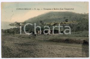1912 CONGO BELGE Trupeau à MOLIRO Lac Tanganyka Carte postale n.155 FP VG