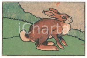 1910 ca ANIMALS Rabbit in the field ILLUSTRATED Postcard FP NV