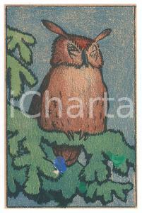 1910 ca ANIMALS Sleeping owl ILLUSTRATED Postcard FP NV