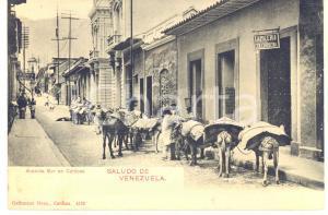 1910 ca CARACAS (VENEZUELA) Avenida Sur - Cartolina ANIMATA muli da soma FP