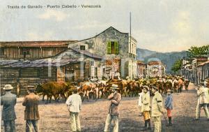1910 ca PUERTO CABELLO (VENEZUELA) Traida de Ganado - Tarjeta postal vintage