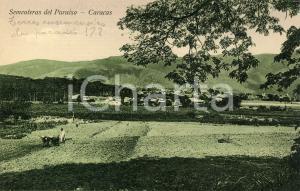 1910 ca CARACAS (VENEZUELA) Sementeras del Paraiso - Cartolina ANIMATA FP NV