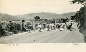 1905 ca CARACAS (VENEZUELA) Carretera del Sur -  Cartolina ANIMATA mandria FP NV
