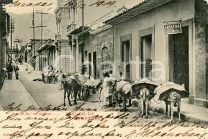 1909 CARACAS (VENEZUELA) Avenida Sur -  Cartolina ANIMATA muli da soma FP VG