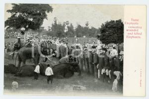 1900ca THAILANDIA Tame elephants removing wounded and killed elephants Postcard