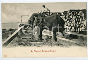 1900 ca INDIA An elephant stacking timber - Vintage Postcard FP NV