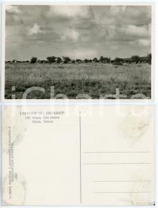 1930 C. ZAGOURSKI «L'Afrique qui disparaît» KENIA  - Zèbres *Postcard 196