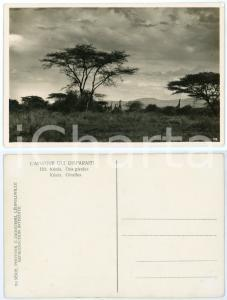 1930 C. ZAGOURSKI «L'Afrique qui disparaît» KENIA - Des girafes *Postcard n.193