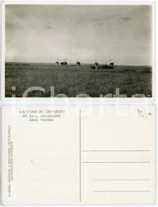 1930 C. ZAGOURSKI «L'Afrique qui disparaît» KENIA - Des autruches *Postcard 197