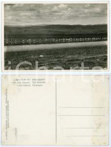 1930 C. ZAGOURSKI «L'Afrique qui disparaît» Lac NAKURU Flamants *Postcard 198