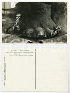1930 C. ZAGOURSKI «L'Afrique qui disparaît» KENIA Maladie des pointes éléphants