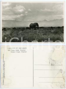 1930 C. ZAGOURSKI «L'Afrique qui disparaît» CONGO BELGE - Eléphant *n.180