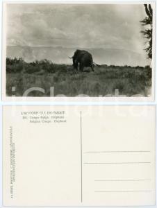 1930 C. ZAGOURSKI «L'Afrique qui disparaît» CONGO BELGE - Eléphant *n.181