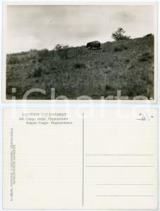 1930 C. ZAGOURSKI «L'Afrique qui disparaît» CONGO BELGE Hippopotame *n.186