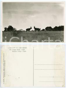 1930 C. ZAGOURSKI «L'Afrique qui disparaît» CONGO BELGE - Copis *Postcard n.188