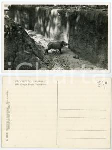 1930 C. ZAGOURSKI «L'Afrique qui disparaît» CONGO BELGE Facochère *Postcard 189