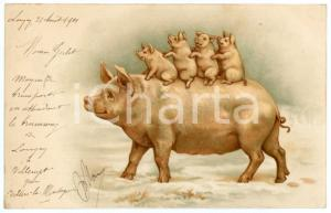 1901 ANIMALS Pig with three piglets - Illustrated Postcard FP VG
