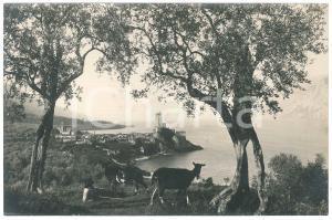 1925 ca LAGO DI GARDA Veduta con il Castello di MALCESINE - Foto ANIMATA 24x16