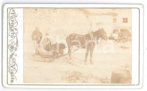 1880 ca ITALIA - ALPI - Slitta trainata da cavallo - Foto ANIMATA CDV