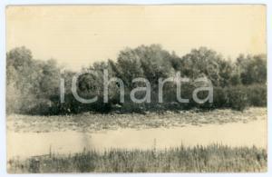 1943 WW2 ARMIR Campagna di RUSSIA - Postazione nella boscaglia *Foto 14x9