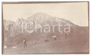 1905 ca LOMBARDIA - ALPI - Pascolo di montagna - Foto VINTAGE ANIMATA 14x8 cm