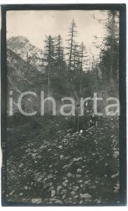 1920 Area di LIVIGNO - Escursionisti in un bosco -  Foto VINTAGE 9x14 cm